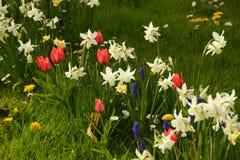 Flowerbed в цветах Вид спереди Стоковые Изображения