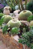 Flowerbed кактуса стоковая фотография rf