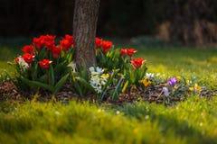 Flowerbed на саде Стоковые Изображения