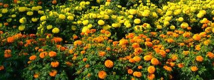 Flowerbed ноготк Стоковые Изображения RF