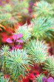 flowerbed осени Стоковое Изображение