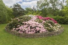 Flowerbed рододендрона, плантация Isabella, парк Ричмонда Стоковая Фотография RF