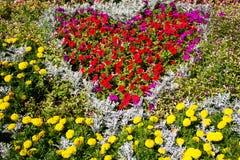 Flowerbed с красной петуньей и желтым ноготк цветет в парке стоковые фото