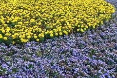 flowerbed fotografie stock libere da diritti