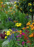 Flowerbed. With lot of different flowers Royalty Free Stock Photos