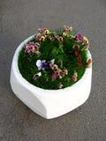 Flowerbed Foto de Stock