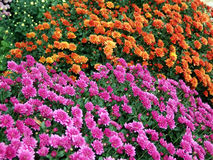 Flowerbed Royalty Free Stock Photography