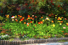 Flowerbed. Full of colorful flowers Stock Photography