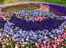 A flowerbed Stock Image