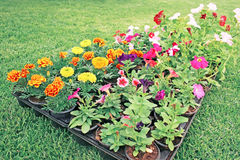Flowerbed Stock Photo