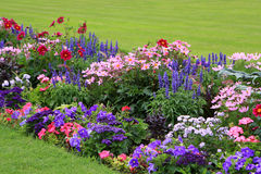 Flowerbed. Full of flowers in Luxembourg garden Stock Images