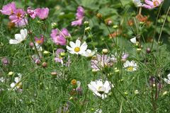 flowerbed Zdjęcie Royalty Free