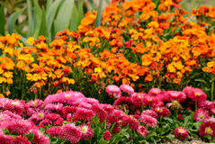 Flowerbed Royalty Free Stock Photos