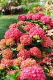 Flowerbed. Beautiful flowerbed in the garden or park Stock Photos