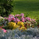 Flowerbed. Royalty Free Stock Photos