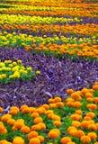 Flowerbed Στοκ φωτογραφίες με δικαίωμα ελεύθερης χρήσης