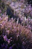 Flowerbed Fotografie Stock