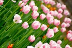 Flowerbed immagine stock