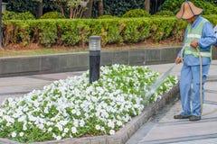 flowerbed royalty-vrije stock foto