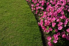 Flowerbed. Flowers and lawn Royalty Free Stock Photography