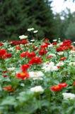 Flowerbed Fotografia Stock Libera da Diritti