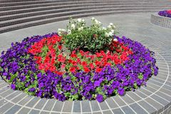 flowerbed obrazy royalty free
