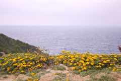 Flowerbed along the sea Stock Photography