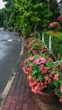 Flowerbed Along Sidewalk Stock Images