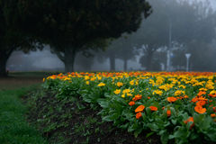 Flowerbed amarelo e alaranjado. imagem de stock