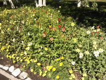 Flowerbed. With autumn mottled flowers Royalty Free Stock Image