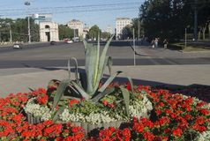Chisinau street. Flowerbed and in the background the area of the National Assembly and the Arch of Triumph, Chisinau, Kisinev Moldova royalty free stock photos