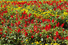 Flowerbed background Royalty Free Stock Images