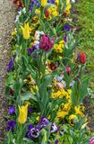 Flowerbed in Bayreuth, Germany. Flowerbed with different flowers in park,  Bayreuth, Germany Royalty Free Stock Images