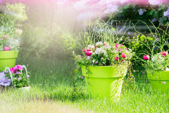 Flowerbed with beautiful flowers standing on the grass in the garden,  sun's rays, blurred background Stock Photo
