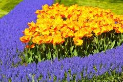 Flowerbed brilhante fotografia de stock