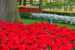 Flowerbed brilhante em Keukenhof imagem de stock