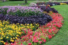 Flowerbed in Budapest Royalty Free Stock Photography