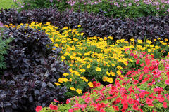 Flowerbed in Budapest Stock Photo