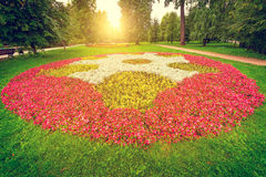 Flowerbed in the city park. Royalty Free Stock Photo