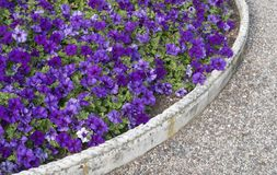 Flowerbed close up Stock Photography