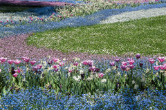 Flowerbed. Colorful flowerbed with blossoming red, white and blue flowers Royalty Free Stock Images
