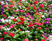 Flowerbed Stock Photography