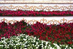 Flowerbed com ornamento oriental Fotografia de Stock