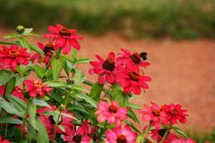Flowerbed con i fiori rossi fotografia stock