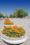 Flowerbed con i fiori sulla zona immagini stock libere da diritti