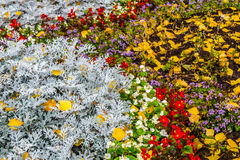 Flowerbed, covered with yellow leaves Royalty Free Stock Image