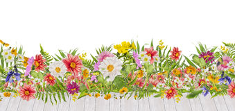 Flowerbed with dahlias flowers and white wooden terrace, isolated. On white background Stock Photos