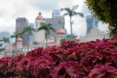 Flowerbed on Dataran Merdeka. KUALA LUMPUR, MALAYSIA - NOVEMBER 1: Sultan Abdul Samad Building on Dataran Merdeka on November 1 2014 in Kuala Lumpur. Building royalty free stock photos