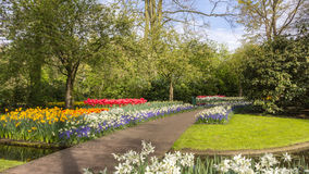 Flowerbed in de Keukenhof Royalty Free Stock Images