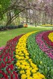 Flowerbed in de Keukenhof Stock Photography